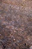 Textuur van schors van een tropische boom Stock Afbeelding