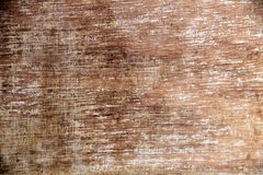 Textuur van schorshout Royalty-vrije Stock Fotografie