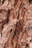 Textuur van schorshout Royalty-vrije Stock Afbeeldingen