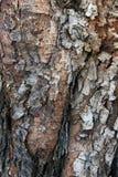 Textuur van schorshout Royalty-vrije Stock Foto