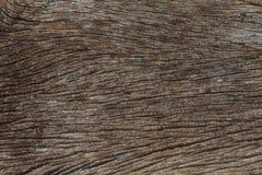 Textuur van schorshout Royalty-vrije Stock Foto's