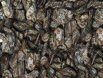 Textuur van schorsstukken Stock Foto