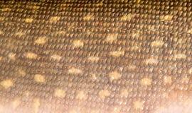 Textuur van snoekenhuid Royalty-vrije Stock Afbeelding
