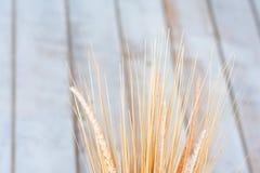Textuur van tarweoren met een tak van katoen in een vaas tegen een boom Stock Fotografie