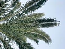 Textuur van tropische zuidelijke grote groene bladeren, takken van verlaten palmen tegen de blauwe hemel Tropical spa achtergrond stock afbeeldingen