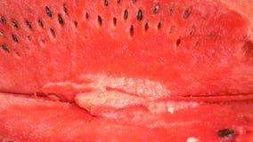 Textuur van verse rijpe watermeloen Macro dichte omhooggaande, hoogste mening 4k stock videobeelden