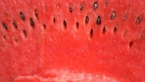 Textuur van verse rijpe watermeloen Macro dichte omhooggaande, hoogste mening 4k stock video