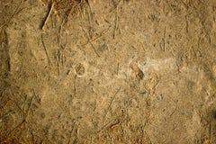 Textuur van zand en Kerstboomnaalden royalty-vrije stock fotografie