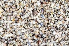 Textuurachtergrond met vele overzeese shells stock foto's