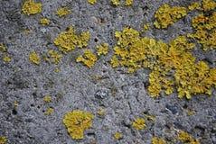 Textuurbeton Oud beton Nat mos-gekweekt beton, royalty-vrije stock fotografie
