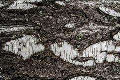 Textuurboom Stock Afbeeldingen