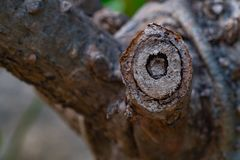 Textuurdetail van een tak die op Plumeria-boom wordt afgesneden stock afbeelding