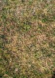 Textuurgebied van vers groen gras als achtergrond royalty-vrije stock foto