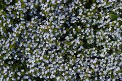 Textuurwildflowers Royalty-vrije Stock Afbeelding