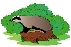 Texugo ao lado do arbusto ilustração royalty free