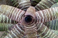 Texure de la hoja de la bromelia Foto de archivo libre de regalías