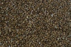 Texure del seme dell'anguria fotografia stock