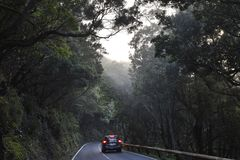 Road through dark forest Tenerife Canary Islands royalty free stock images