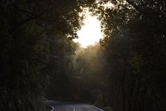 Road through dark forest Tenerife Canary Islands royalty free stock image
