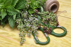 TFresh herbs lemon balm, thyme, mint on wooden board and accessories Stock Photo