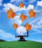 Tft monitor. And flying autumn leaves Royalty Free Stock Images