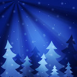 Tfur-trees under a snowfall at night. Stock Photos