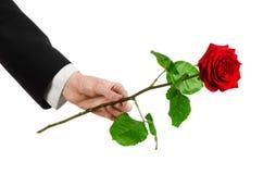Thème de Saint-Valentin et de jour des femmes : la main de l'homme dans un costume jugeant une rose rouge d'isolement sur le fond Photo stock