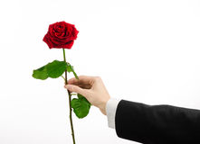 Thème de Saint-Valentin et de jour des femmes : la main de l'homme dans un costume jugeant une rose rouge d'isolement sur le fond Image libre de droits