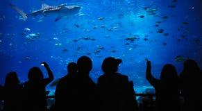 Théâtre sous l'eau Photos stock