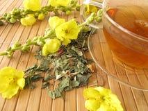 Thé avec des fleurs de mullein Image stock