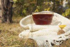 Thé avec l'écharpe tricotée par blanc en automne Photographie stock libre de droits