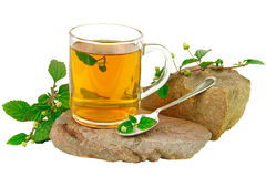 Thé avec l'herbe douce aztèque Photographie stock libre de droits