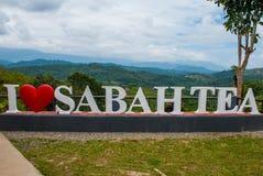 Thé blanc énorme de Sabah d'amour du lettrage I Le Bornéo, Malaisie Photo stock