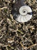 Thé blanc - Bai chinois Cha Photographie stock libre de droits