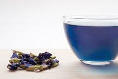Thé bleu sain de fines herbes Images stock