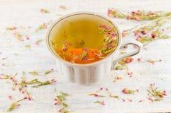 Thé chaud d'amer-herbe dans une tasse de thé Photos stock