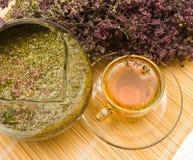 Thé curatif avec l'origan Photographie stock