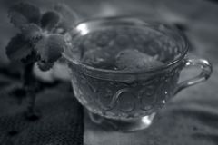 Thé d'Ajwain, ammi de Trachyspermum Image stock