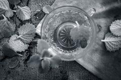 Thé d'Ajwain, ammi de Trachyspermum dans une tasse transparente avec quelques feuilles d'ajwain bonnes pour la santé, peau et pou Image libre de droits