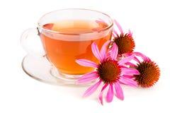 Thé d'Echinacea d'isolement sur le fond blanc Thé médicinal photos stock