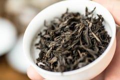 Thé d'oolong de pao du DA hong dans gaiwan ou thé-tasse dans la main humaine, macro tir avec le foyer sélectif, cérémonie de thé  Images stock