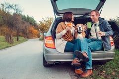 Thé dans le camion de voiture - l'ajouter affectueux au chien se repose dans le truc de voiture Photos libres de droits