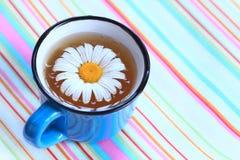 Thé de camomille Image libre de droits