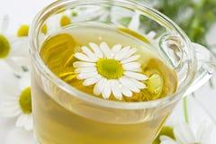 Thé de camomille, fond blanc, plan rapproché Image libre de droits