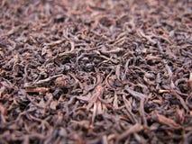 thé de collecte photographie stock libre de droits