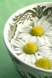 Thé de fines herbes - camomille Photographie stock libre de droits