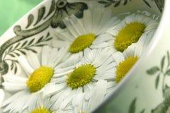 Thé de fines herbes - camomille Images libres de droits
