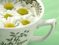 Thé de fines herbes - camomille Photos stock