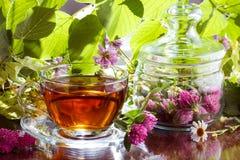 Thé de fines herbes de trèfle Photo libre de droits