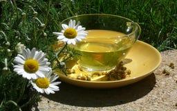 Thé de fleur de camomille Photographie stock libre de droits
